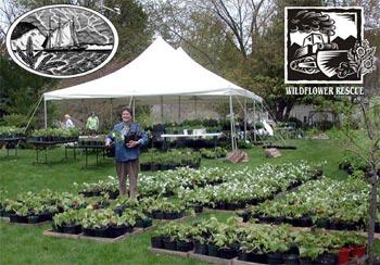 village-green-plant-sale