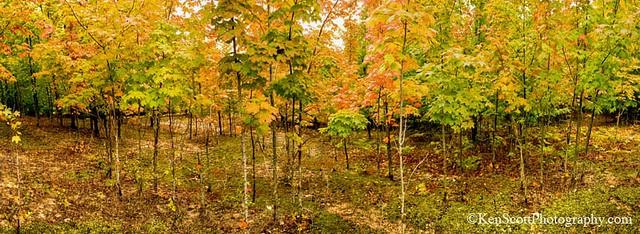 fall-its-coming-by-ken-scott