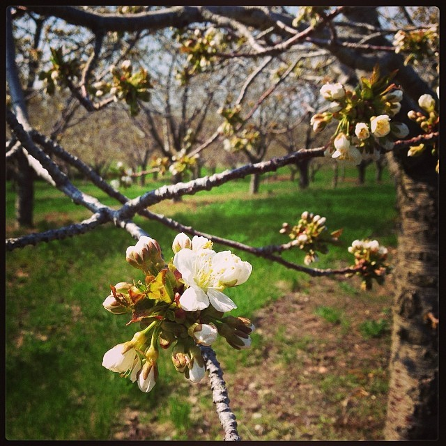 Blossom Time on the Leelanau Peninsula