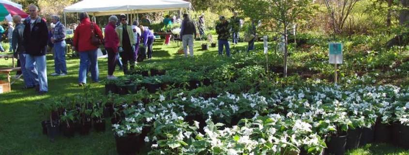 Conservancy-Leland-Village-Green-Plant-Sale