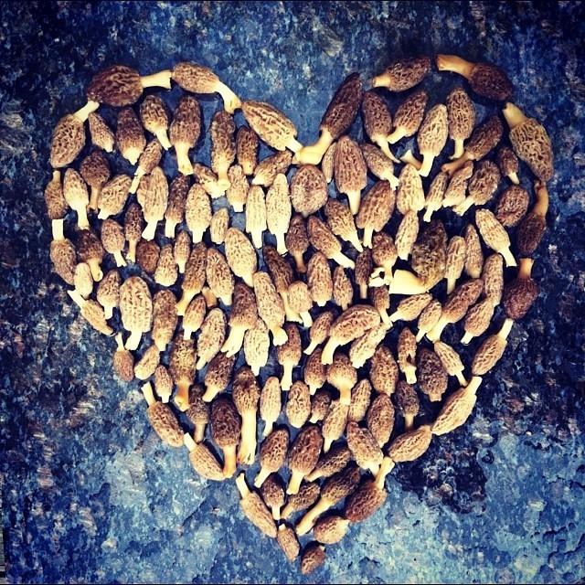 Morel Heart