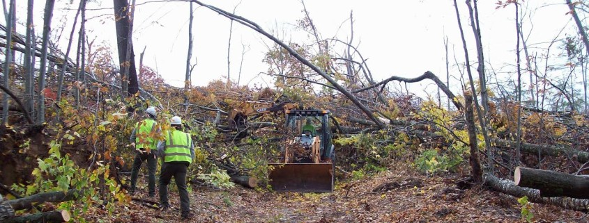 Alligator Hill Trail Clearing