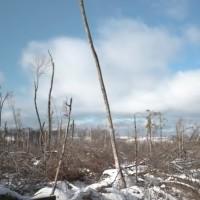 alligator hill storm damage