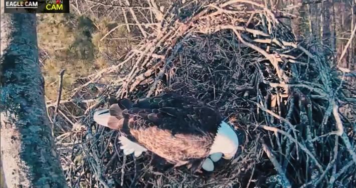 Platte River Eagle Cam