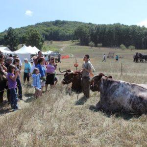 Families visit Oxen, courtesy SL