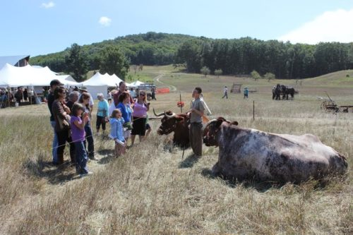 Families visit Oxen, courtesy Sleeping Bear Dunes National Lakeshore